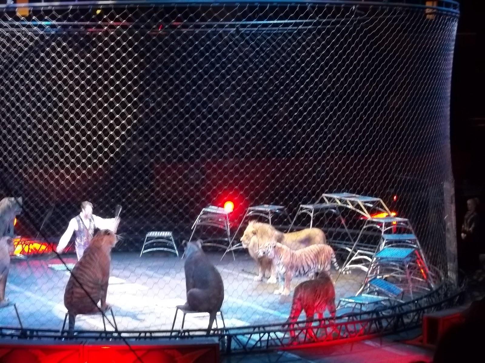http://3.bp.blogspot.com/-56AURUMwXHM/ULo8MbnRMJI/AAAAAAAAD3s/91oDP2UqK_c/s1600/circus+cats+lions+tigers.JPG