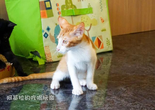 14633249 1099288976791013 7344945522461209721 o - 熱血採訪 朵貓貓咖啡館 - 貓咪餐廳