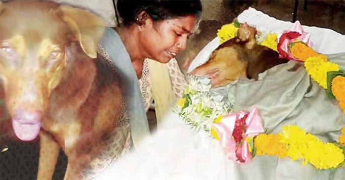 Chó chính là món quà vô giá mà Thượng Đế ban tặng cho con người