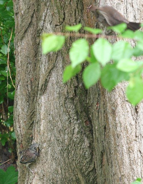 птенец на дереве