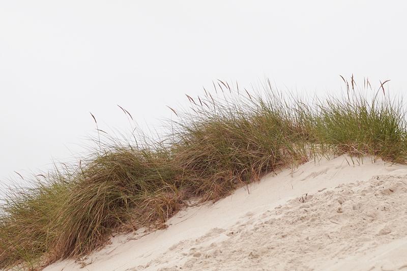 Amrum Dünengras Strand Nordsee
