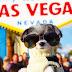 Τι μπορεί να κάνει ένας σκύλος στο Λας Βέγκας;