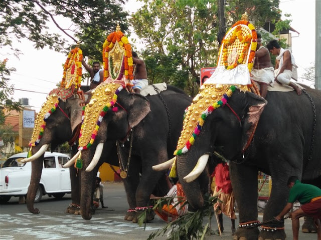 fort kochi elephants
