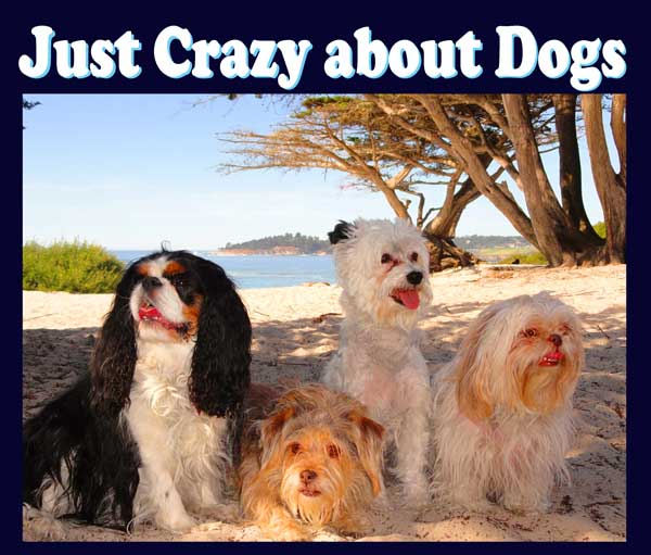 JUST CRAZY ABOUT DOGS