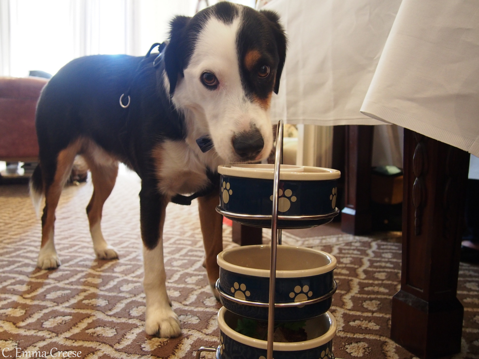 Luxury Afternoon Tea Egerton Hotel Kensington Adventures of a London Kiwi