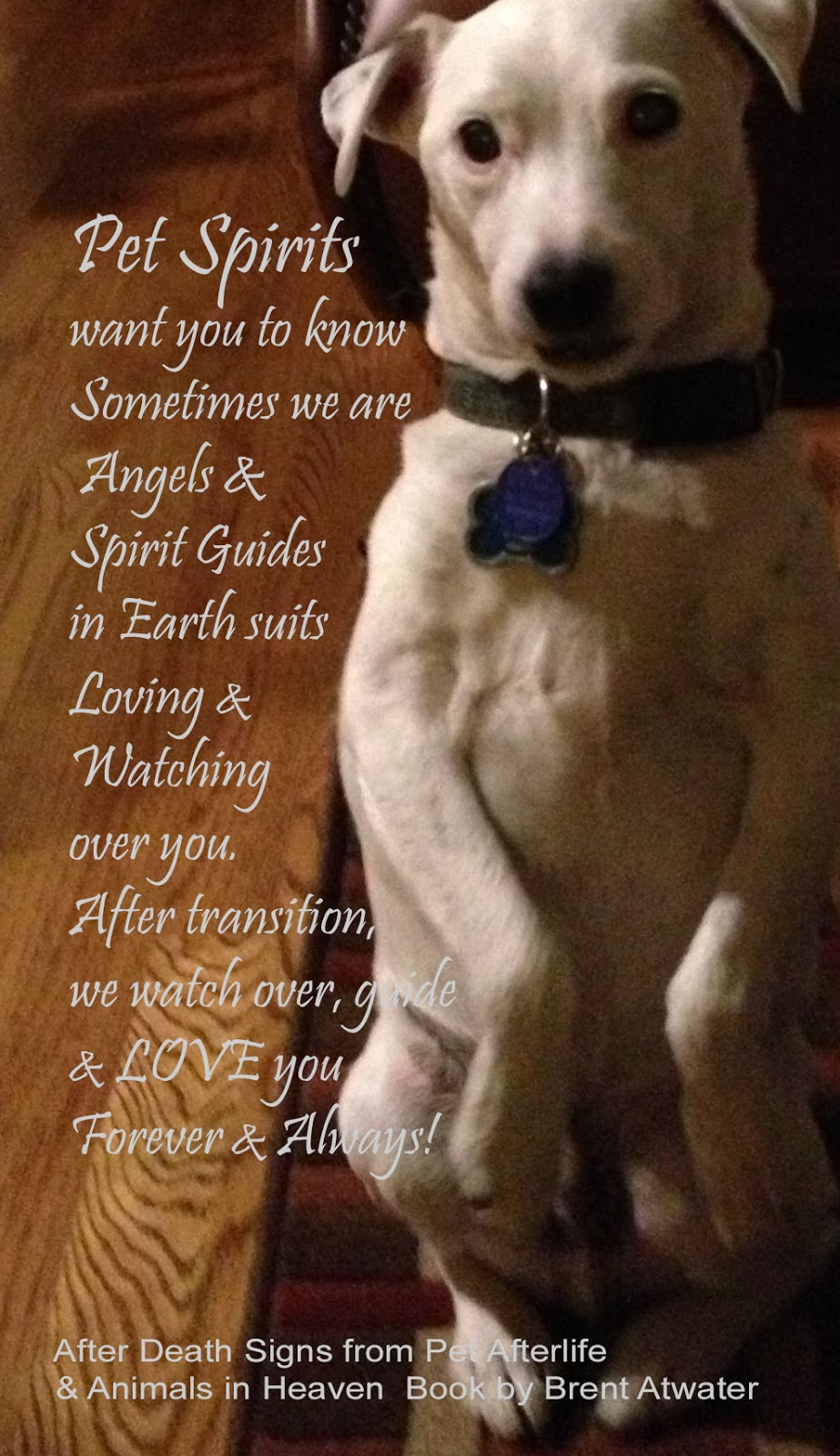 Daily Pet Loss Inspirational Quotes From Pet Spirits 30 Angels And