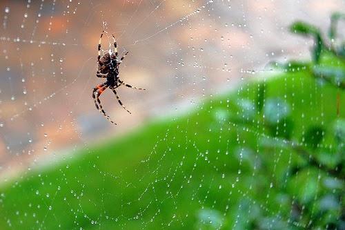 araña en telaraña sobre fondo verde y ocre de la entrada significado de soñar con arañas