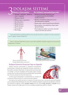 6. Sınıf Fen Bilimleri Ders Kitabı Cevapları Sevgi Yayınları Sayfa 57