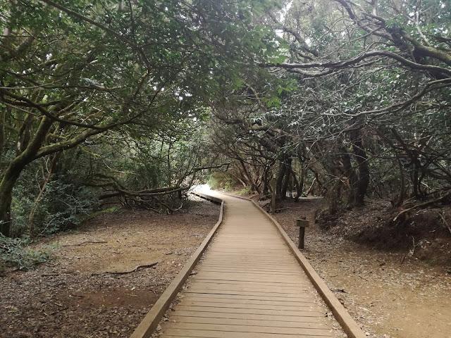 Anaga, Tenerife, Sendero de los sentidos, camino de madera