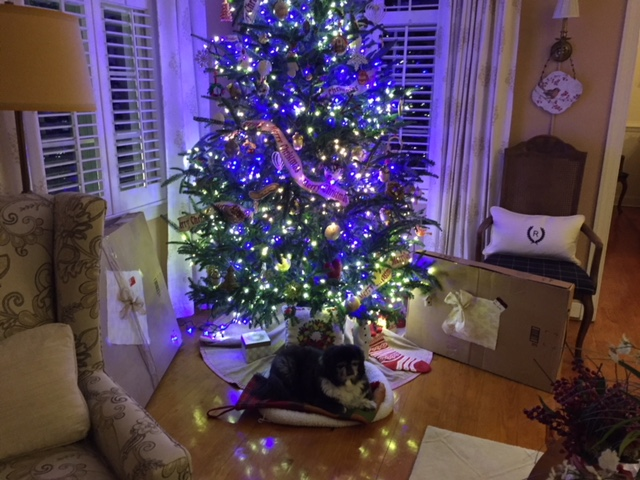 i know i said all the christmas blogs were done but then i received these pictures - Christmas Blogs