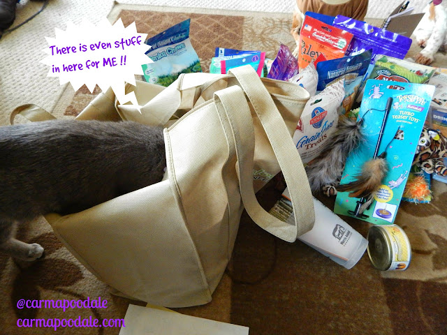 Molly the kitten in the Blogpaws swag bags