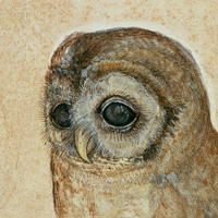 http://www.buktole.com/2017/01/sowa-durera-durer-owl.html
