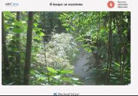 https://www.educaixa.com/microsites/El_bosque/Bosque_un_ecosistema/
