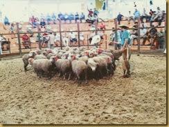RURAL: Conversa sobre Ovinocultura na AABB (26/01)
