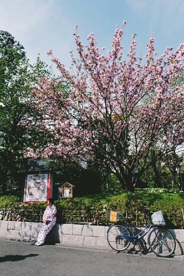 lokasi melihat sakura di tokyo
