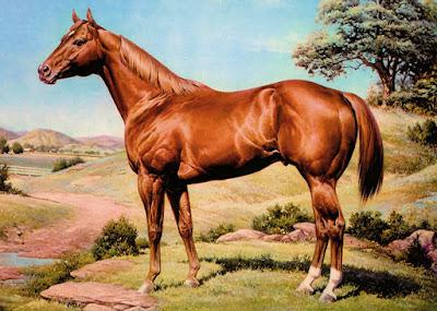 O cavalo Quarto de Milha é um cavalo de porte médio, sua altura fica entre 1,52 e 1,62m. É considerado um dos cavalos mais versáteis, utilizado principalmente em provas de hipismo rural, corridas planas, salto e ainda na lida com o gado.
