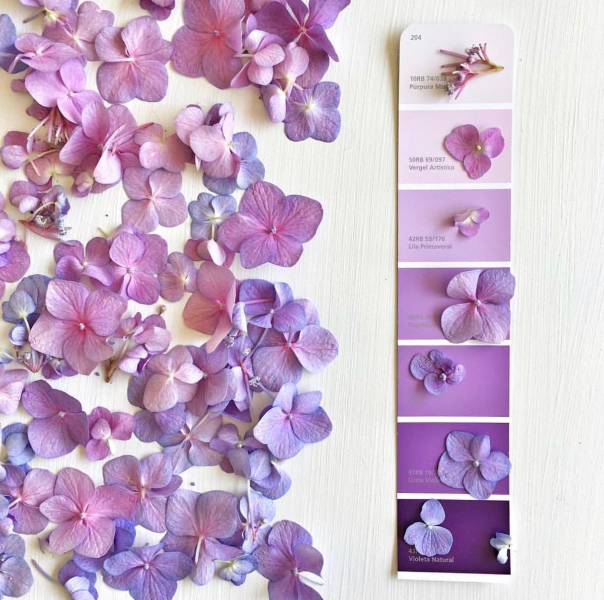 El violeta en el jardín por @itasflowers
