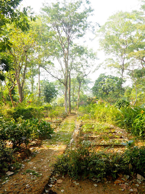 Herb garden at PPLH Seloliman Nature Reserve, East Java, Indonesia