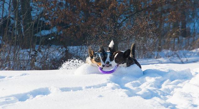 podróże z psem, karkonosze z psem, w góry z psem