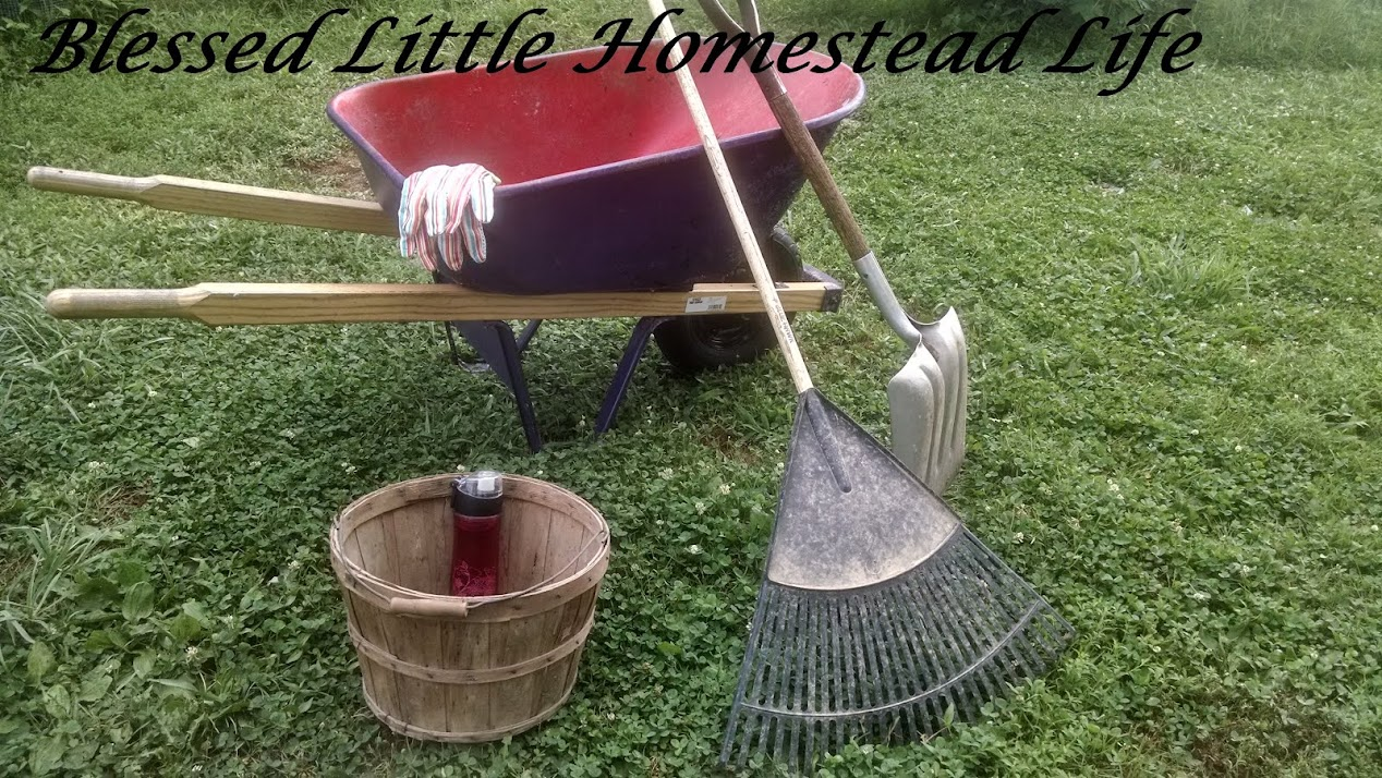 Blessed Little Homestead Life