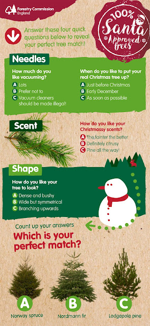 How to choose your perfect Christmas Tree