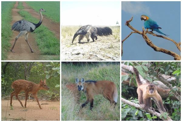 Quanto vale a diversidade biológica e social do Cerrado?