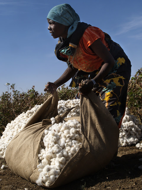 Cotton in Africa