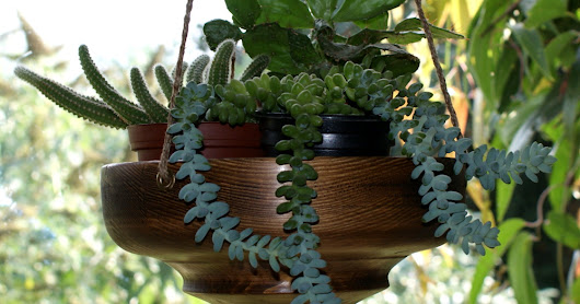 Hanging bowls for plants...