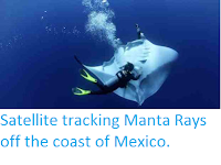 http://sciencythoughts.blogspot.co.uk/2012/05/satellite-tracking-manta-rays-off-coast.html