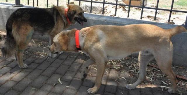 Φιλοζωική Παραμυθιάς: Μην αφήνετε τους οικόσιτους σκύλους ελεύθερους - Κίνδυνος ατυχήματος άλλα και ποινικών κυρώσεων