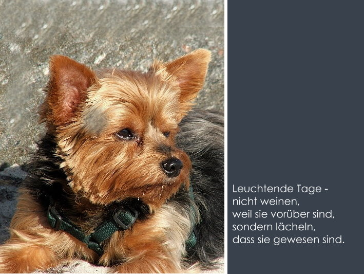 Danke About Dogs And Chiru Hundeblog