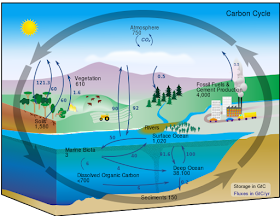 This carbon cycle diagram shows the storage and annual exchange of carbon between the atmosphere, hydrosphere and geosphere in gigatons - or billions of tons - of carbon (GtC). Carbon isotopes of plant materials from the geological record have been used in the past to predict past CO2. Our research suggests more work needs to be done to understand this proxy. This is a public domain image from Wikipedia.