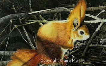 painting of a red squirrel, British wildlife art