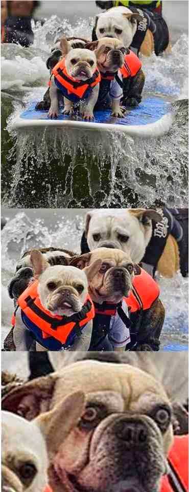 Funny Surfing Scared Dog Joke Picture