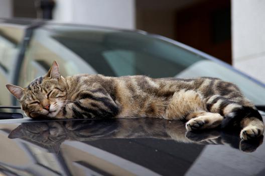 Dlaczego koty tyle śpią?