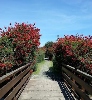 Il rosso a Monte Claro
