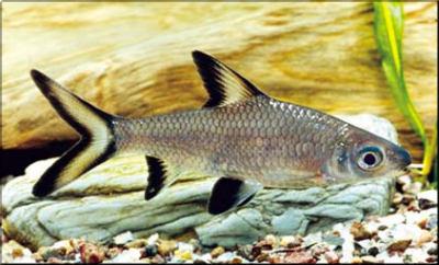Marine Aquariums Shark Fish For Aquarium