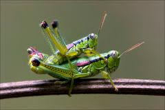 http://mundoanimalevidaselvagem.blogspot.com/