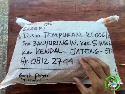 Benih pesanan BASERI Kendal, Jateng  (Setelah Packing)