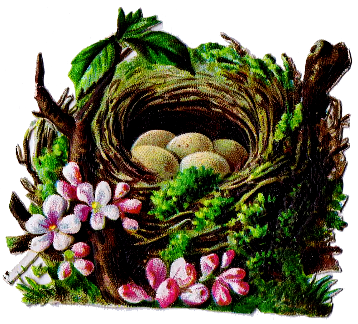 Bird Nest And Egg Graphics