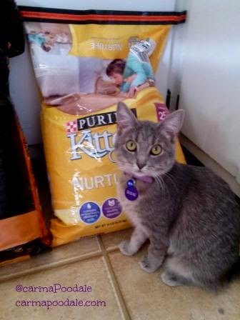 Purina Kitten Chow made Molly Mew happy