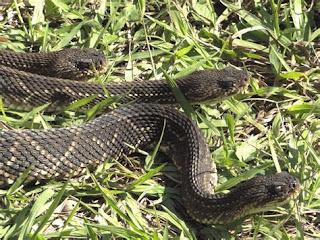 2. Ophidiophobia - Ketakutan akan ular