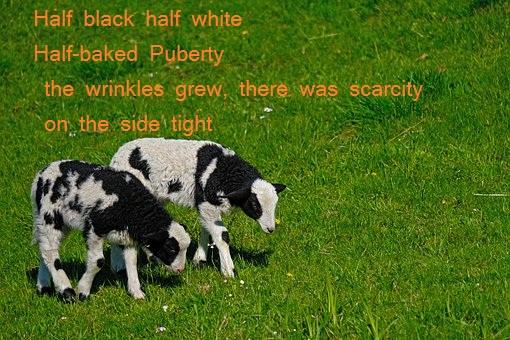 English Poem,English Poem for life