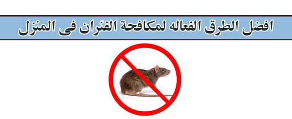 طرق مكافحة الفئران فى المنزل