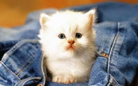 New Baby Cats Animal Hd Wallpaper12