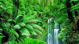 Fungsi-Fungsi Hutan dan Penggolongan Hutan - Media Informasi Pengetahuan