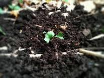 Pengertian dan Sumber Bahan Organik Tanah