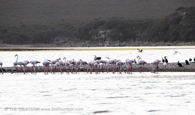 Flamingos and herons and pelicans on the De Hoop Vlei in the De Hoop Nature Reserve in South Africa.