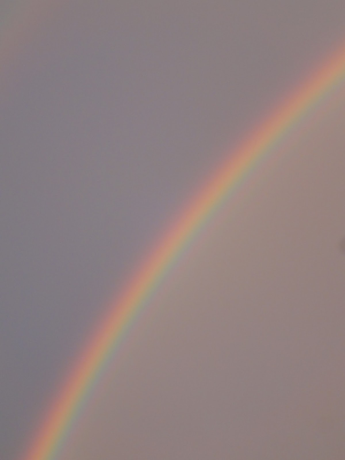 Clara Sandell Rainbow