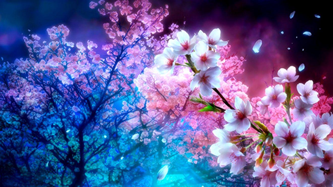 Beautiful Cherry Blossom Tree Flower Wallpaper Wallpapers Gallery